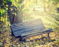 老长木凳在秋天公园 库存图片