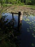 老长满的池塘 图库摄影