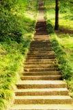 老长的石生苔楼梯在绿色森林里 库存照片