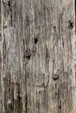 老难看的东西木背景纹理 免版税库存图片