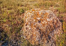 老青苔和地衣石头 库存图片