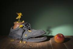老鞋子和干花 免版税库存照片