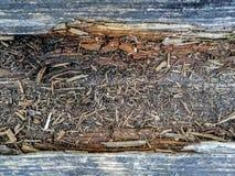 老风化了用绿色青苔盖的木板条 免版税图库摄影