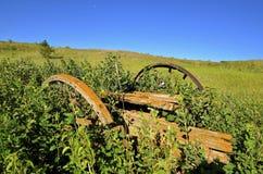 老马车车轮长的草 库存图片