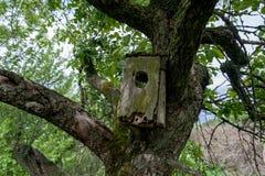 老鸟舍在户外树枝 免版税库存照片