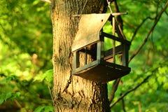 老鸟舍简单的静物画照片在树的 免版税库存照片