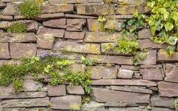 老鹅卵石墙壁植被背景 库存图片