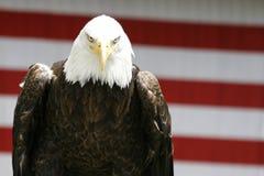 老鹰偷偷靠近 免版税图库摄影