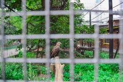 老鹰在动物园里 库存照片