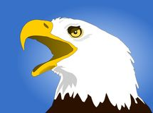 老鹰朝向白色 免版税库存图片