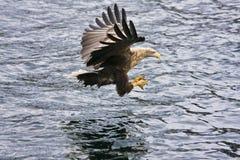 老鹰海运 库存照片