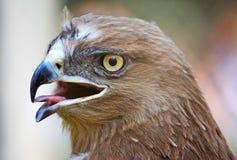 老鹰纵向 免版税图库摄影