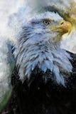 老鹰美国鸟水彩绘画 库存例证