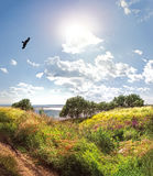 老鹰腾飞在河、草甸有草的在前景和午间太阳 免版税库存图片