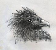 老鹰顶头草图 免版税库存照片