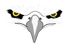 老鹰顶头白色 图库摄影