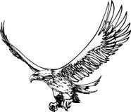 老鹰飞行 免版税库存照片