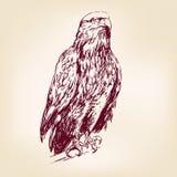 老鹰-传染媒介例证 免版税图库摄影
