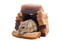 老鼠在他们的面包房子里吃面包 免版税库存图片