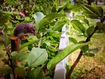 老鼠坐植物 免版税库存图片