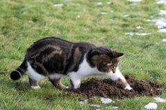 老鼠狩猎 免版税库存照片