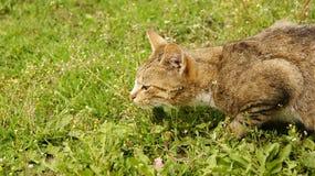 老鼠狩猎 免版税库存图片