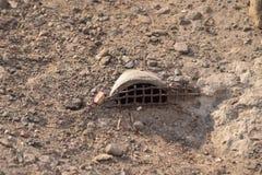 老鼠监狱 库存图片