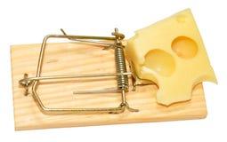 老鼠陷井和乳酪 免版税图库摄影