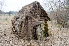 老,毁坏射线、日志和棍子一点木被放弃的被破坏的沙沙响的打破的房子长满与青苔和植物 库存照片