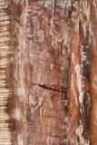 老破旧的木纹理 库存照片
