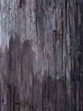 老黑木纹理背景 免版税图库摄影