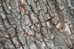 老结构树吠声 库存图片