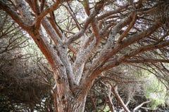 老结构树背景 免版税库存照片