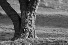 老结构树 库存图片