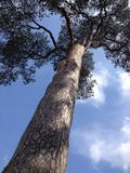 老结构树 免版税库存图片