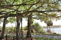 老结构树 库存照片