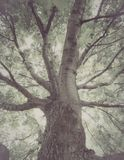 老阴沉的树 库存图片