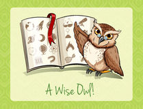 老说法一头明智的猫头鹰 库存照片