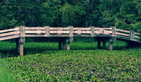 老水泥桥梁 库存照片