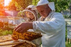 老练的蜂农祖父教他的关心对蜂的孙子 养蜂 经验调动  免版税库存照片