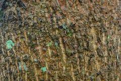 老绿色布朗黑色木表面纹理 库存照片