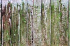 老绿色木纹理 库存图片
