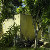 老黄色混凝土墙 免版税图库摄影