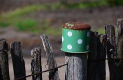 老绿色生锈的罐 免版税图库摄影