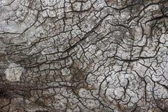 老破裂的木头的纹理 库存照片