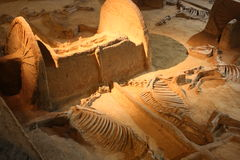 考古学博物馆 库存图片