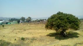 考古学站点:Ixtépete,瓜达拉哈拉 图库摄影