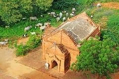 考古学bagan缅甸区域 库存照片