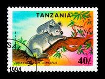 考拉袋熊cinereus,濒于灭绝的物种serie,大约1994年 免版税库存图片