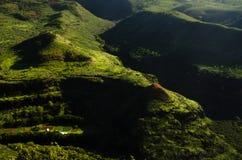 考艾岛海岛的豪华的绿叶 免版税库存图片